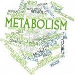 Metabolism quotes