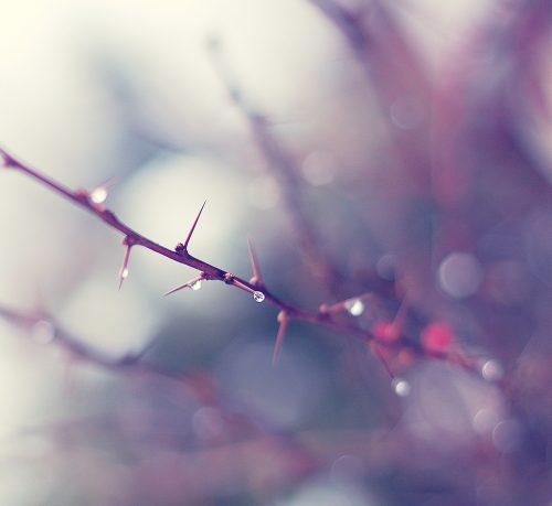 Tears of Joy, (when beauty strikes…)